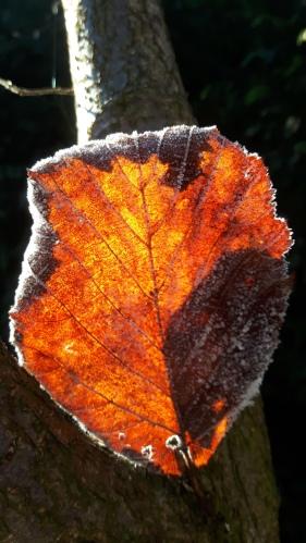 feuille automne.jpg