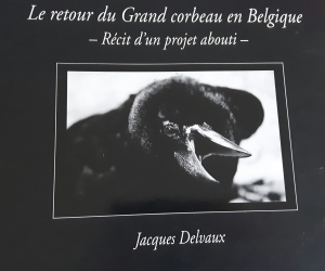 Le retour du grand corbeau en Belgique